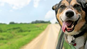 4 Benefits of Pets for Seniors